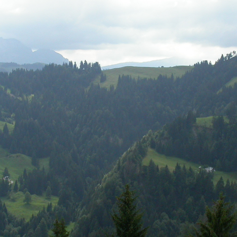 Waldlandschaft+Napf+LU.png, enlarged picture.